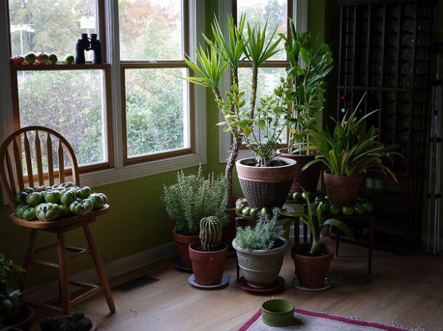 piante-in-casa - m fiori - arlotti marco - fioraio a rimini